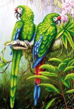 Пара попугаев. Размер - 27 х 39 см.