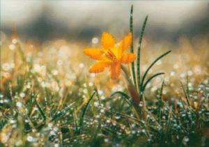 Утренняя роса. Размер - 40 х 30,3 см.