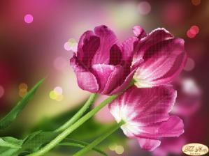 Тюльпаны Каравелла. Размер - 32 х 24 см.