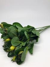 Шиповник,цв.лимонный