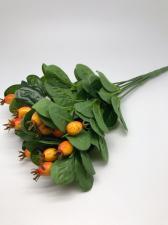 Шиповник,цв.оранжевый