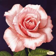 Роза Афродита. Размер - 30 х 30 см.