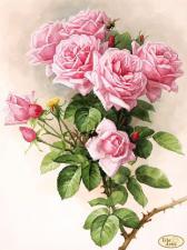 Английские розы. Размер - 30 х 40 см.
