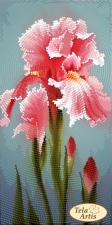 Садовые зарисовки.Розовый ирис. Размер - 12 х 24 см.