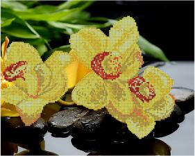 Жёлтые орхидеи. Размер - 32 х 26 см.
