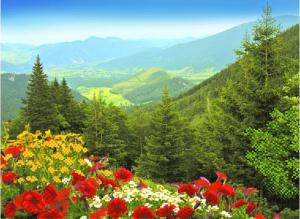 Альпийские луга. Размер - 49 х 37 см.