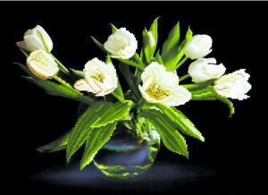 Белые тюльпаны. Размер - 49 х 37 см.
