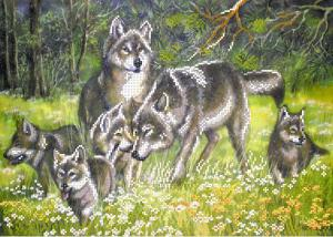Волки. Размер - 49 х 37 см.