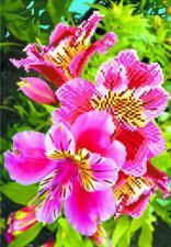 Лилии розовые. Размер - 28 х 34 см.