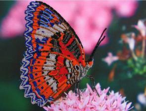 Бабочка 3. Размер - 32 х 25 см.