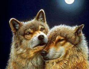 Волк и волчица. Размер - 60 х 45 см.