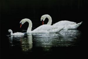 Лебединая семья. Размер - 42 х 30,3 см.