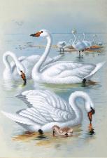 Лебеди на отливе. Размер - 27 х 39 см.