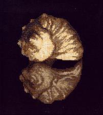 Ракушки.Морской дар. Размер - 21 х 23 см.